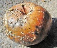 Порча на отношения - гнилое яблоко любви